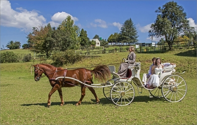 CA-002-0848858-Carriage for all Occasions-1479-M1479_S