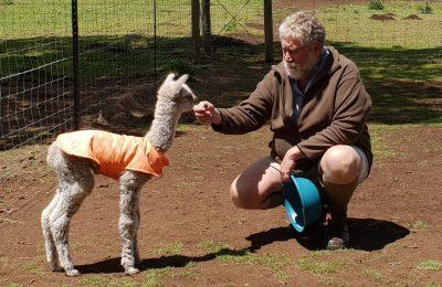 Endeavour Alpaca's
