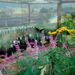greenhouse in the midlands