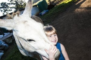 little girl holding a donkey